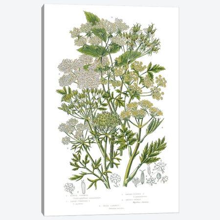 Flowering Plants III Canvas Print #WAC9700} by Wild Apple Portfolio Canvas Art Print