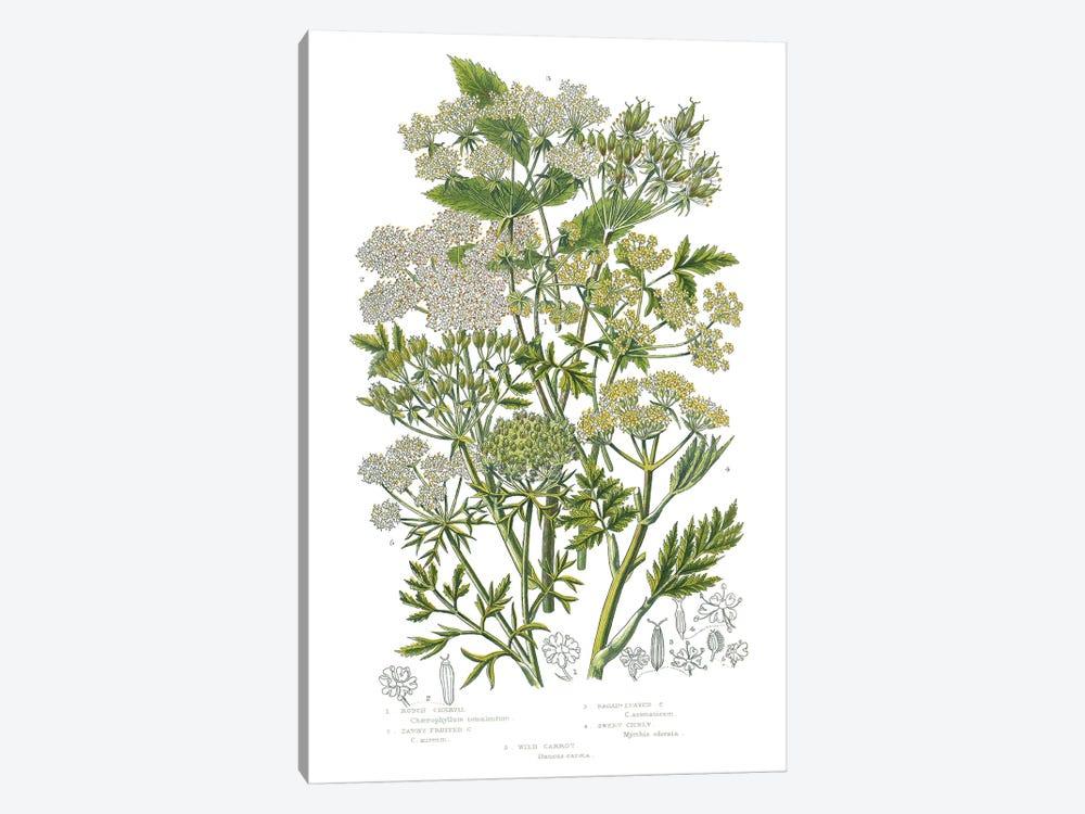 Flowering Plants III by Wild Apple Portfolio 1-piece Canvas Art