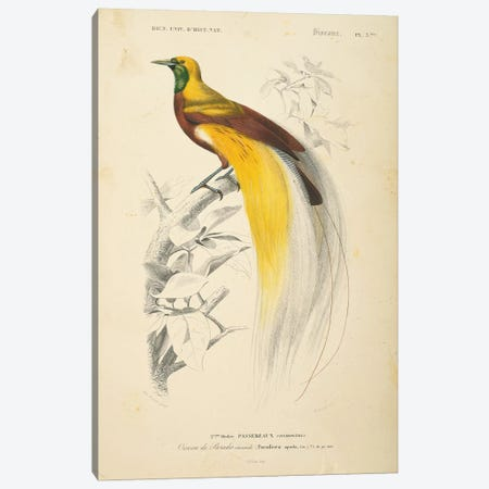 Oiseaux de Paradis Canvas Print #WAC9705} by Wild Apple Portfolio Canvas Art