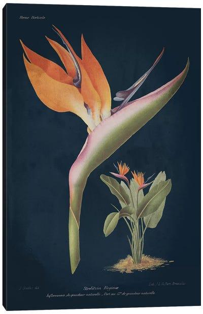 Stelitzia Reginoe Dark Blue Canvas Art Print