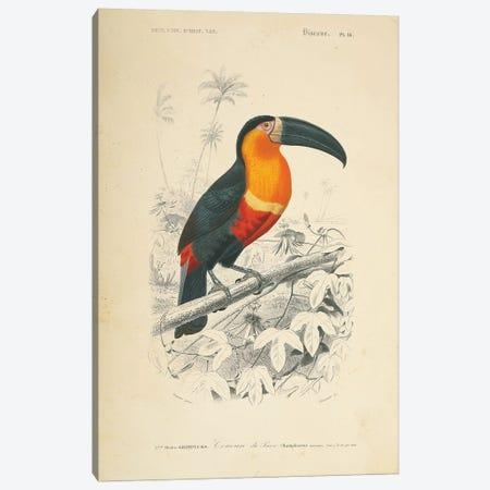 Toucan du Para Canvas Print #WAC9709} by Wild Apple Portfolio Canvas Print