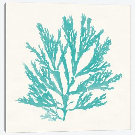 Pacific Sea Mosses I Aqua Canvas Print #WAC9736} by Wild Apple Portfolio Canvas Art Print