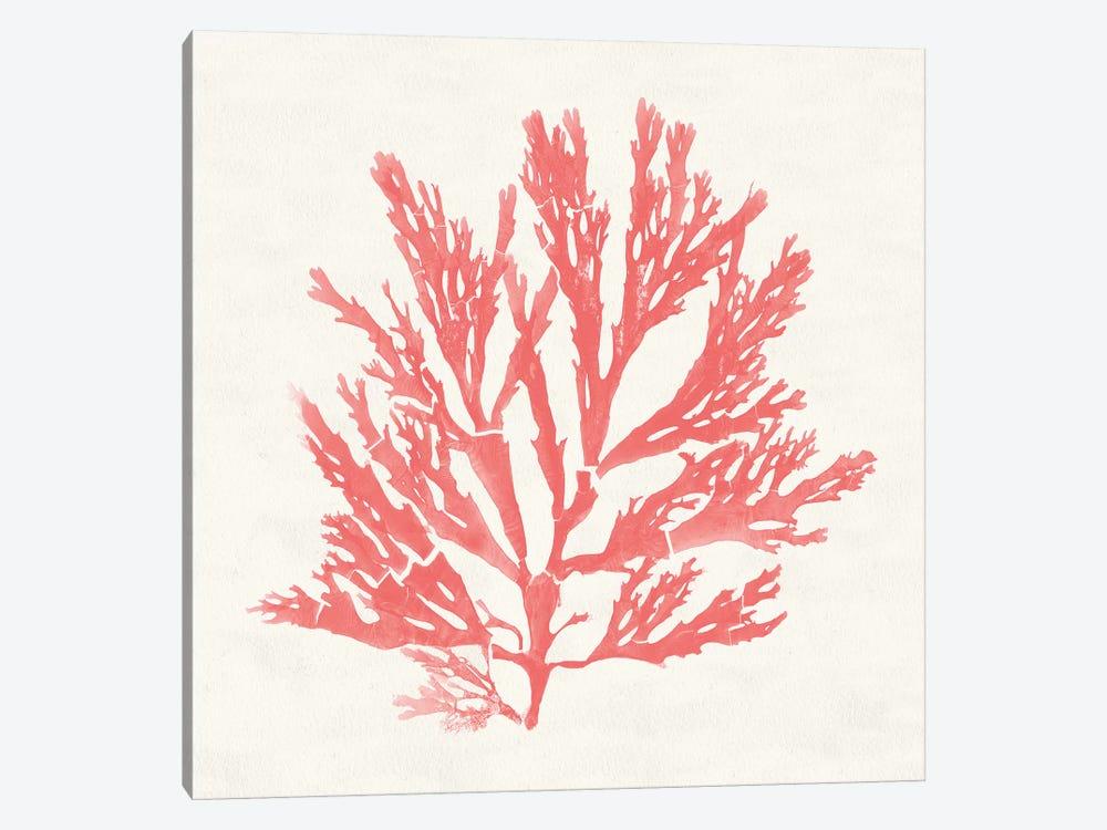 Pacific Sea Mosses I Coral by Wild Apple Portfolio 1-piece Canvas Art
