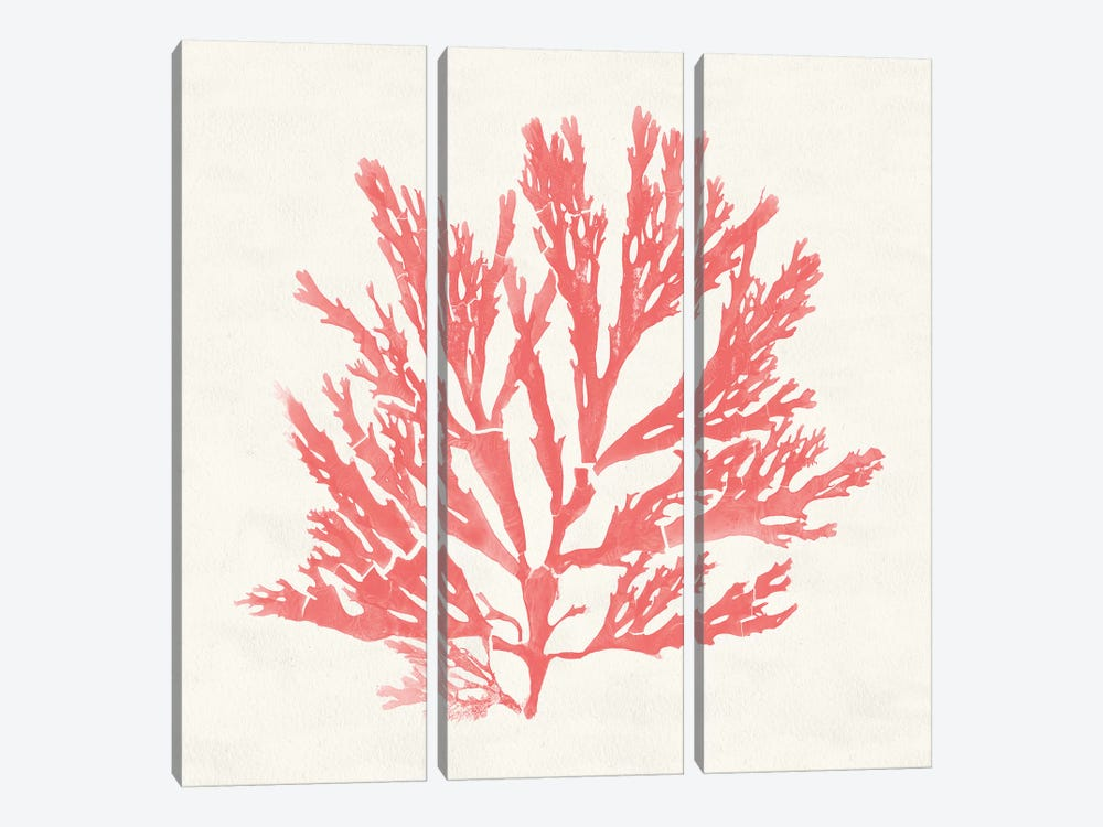 Pacific Sea Mosses I Coral by Wild Apple Portfolio 3-piece Canvas Art