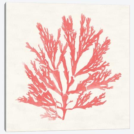 Pacific Sea Mosses I Coral Canvas Print #WAC9737} by Wild Apple Portfolio Canvas Print