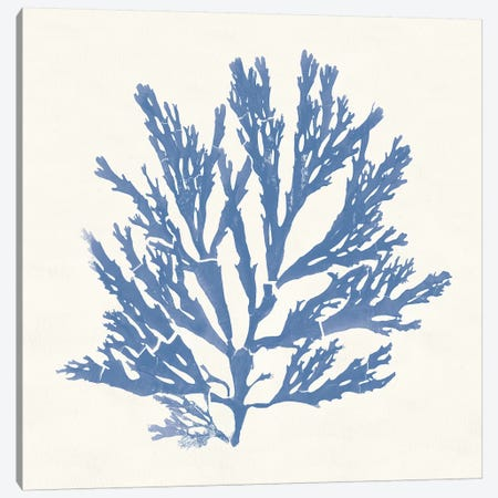 Pacific Sea Mosses I Light Blue Canvas Print #WAC9738} by Wild Apple Portfolio Canvas Art
