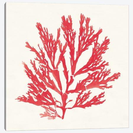 Pacific Sea Mosses I Red Canvas Print #WAC9739} by Wild Apple Portfolio Canvas Wall Art
