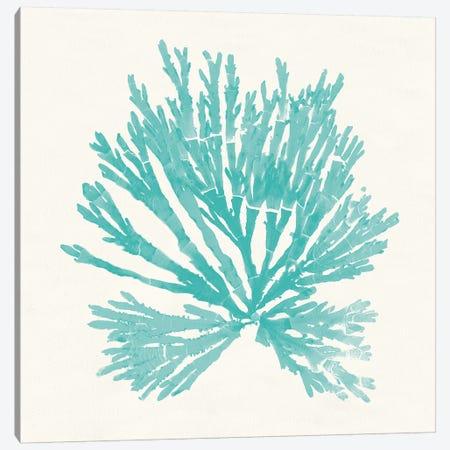 Pacific Sea Mosses II Aqua Canvas Print #WAC9740} by Wild Apple Portfolio Canvas Print
