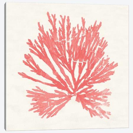 Pacific Sea Mosses II Coral Canvas Print #WAC9741} by Wild Apple Portfolio Art Print