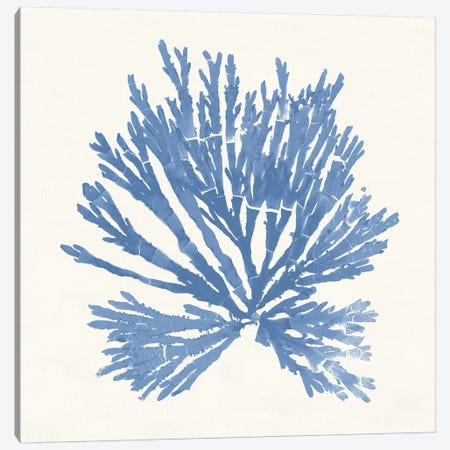 Pacific Sea Mosses II Light Blue Canvas Print #WAC9742} by Wild Apple Portfolio Art Print