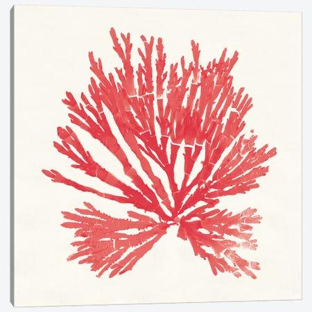 Pacific Sea Mosses II Red Canvas Print #WAC9743} by Wild Apple Portfolio Canvas Art Print