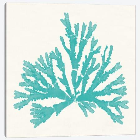 Pacific Sea Mosses IV Aqua Canvas Print #WAC9744} by Wild Apple Portfolio Canvas Art