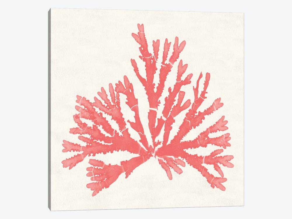 Pacific Sea Mosses IV Coral by Wild Apple Portfolio 1-piece Art Print