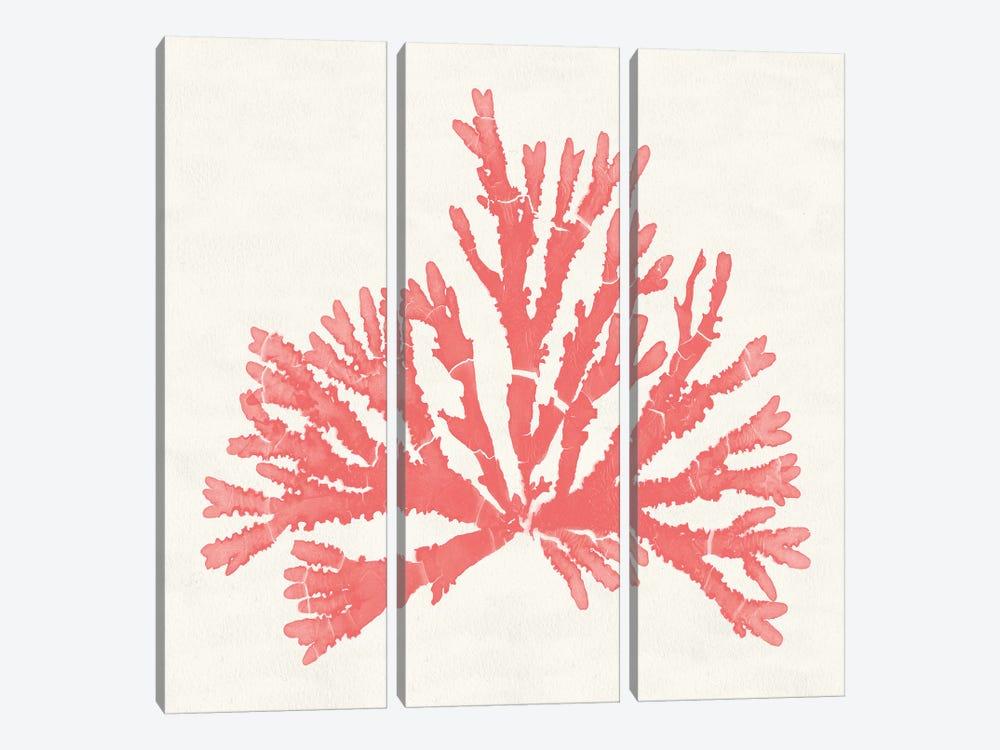 Pacific Sea Mosses IV Coral by Wild Apple Portfolio 3-piece Canvas Art Print
