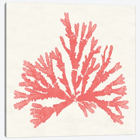 Pacific Sea Mosses IV Coral Canvas Print #WAC9745} by Wild Apple Portfolio Canvas Art