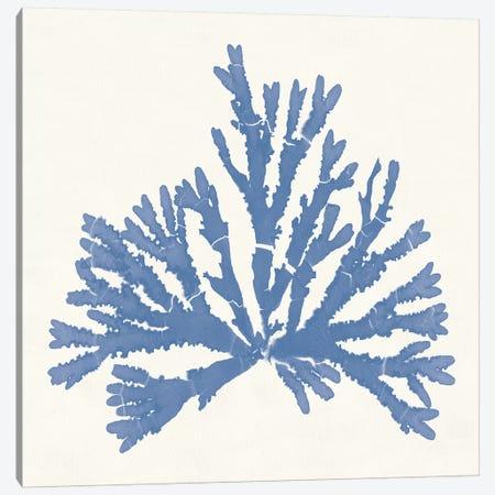 Pacific Sea Mosses IV Light Blue Canvas Print #WAC9746} by Wild Apple Portfolio Canvas Artwork