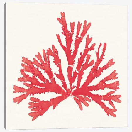 Pacific Sea Mosses IV Red Canvas Print #WAC9747} by Wild Apple Portfolio Canvas Wall Art