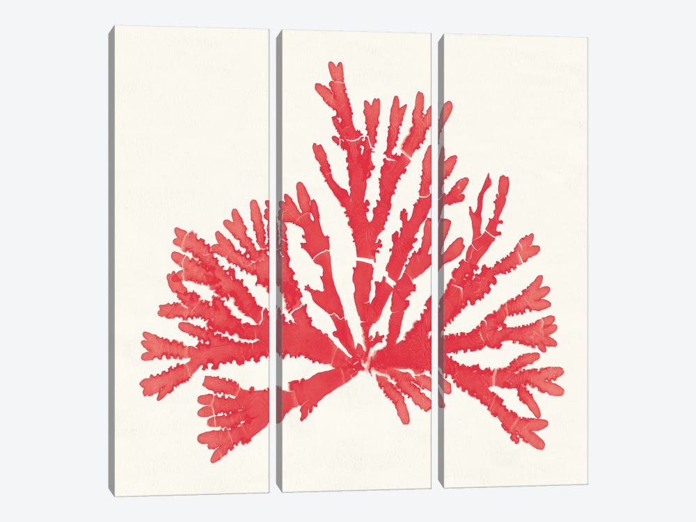 Pacific Sea Mosses IV Red by Wild Apple Portfolio 3-piece Canvas Print