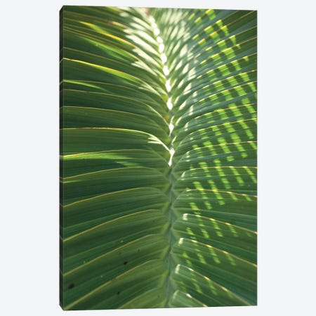 Palm Detail I Canvas Print #WAC9748} by Wild Apple Portfolio Art Print