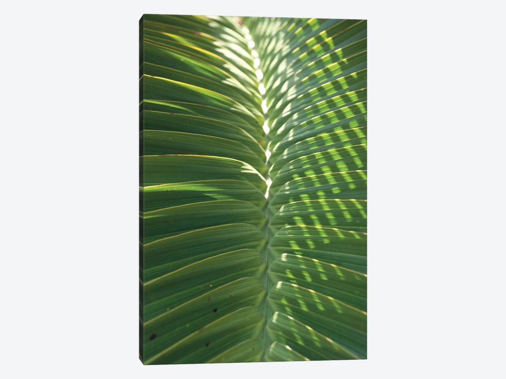 Palm Detail I by Wild Apple Portfolio 1-piece Canvas Artwork