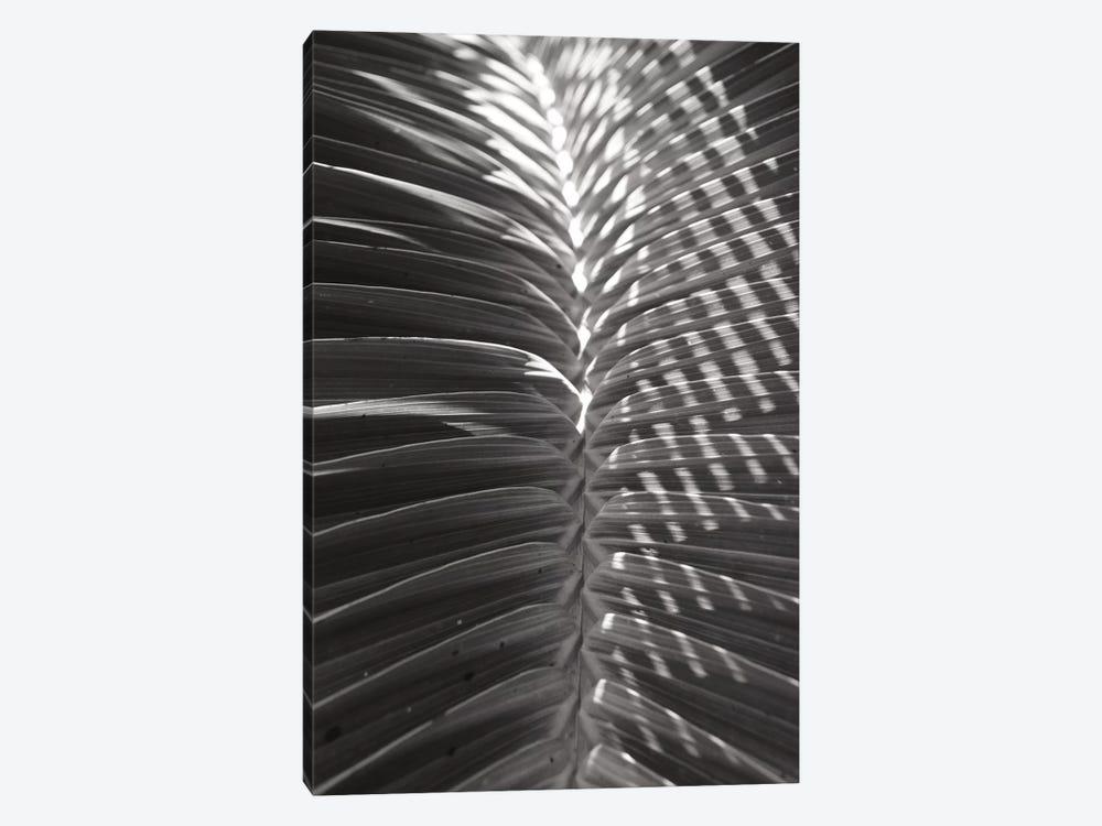 Palm Detail I In Black And White by Wild Apple Portfolio 1-piece Canvas Print