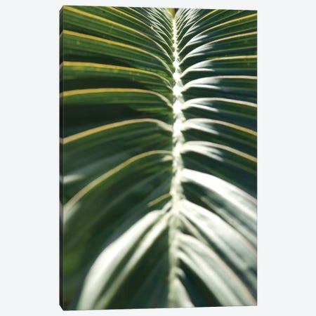 Palm Detail II Canvas Print #WAC9750} by Wild Apple Portfolio Canvas Art