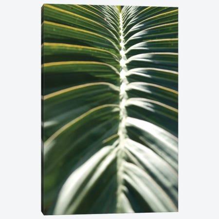 Palm Detail II Canvas Print #WAC9750} by Wild Apple Portfolio Canvas Art
