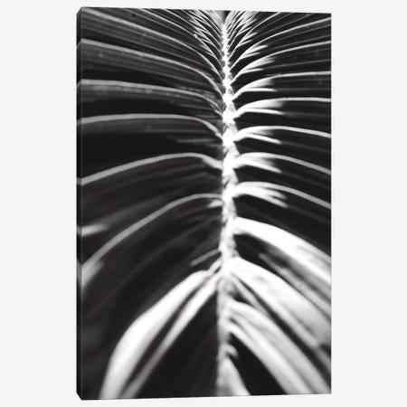 Palm Detail II In Black And White Canvas Print #WAC9751} by Wild Apple Portfolio Canvas Art