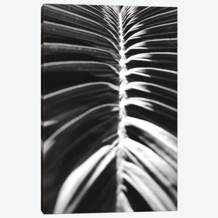 Palm Detail II In Black And White Canvas Print #WAC9751} by Wild Apple Portfolio Canvas Art