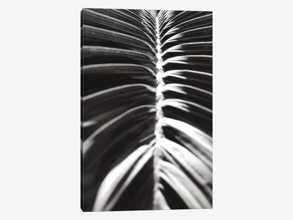 Palm Detail II In Black And White by Wild Apple Portfolio 1-piece Canvas Art