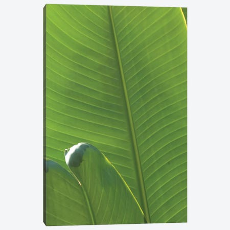 Palm Detail III Canvas Print #WAC9752} by Wild Apple Portfolio Canvas Artwork