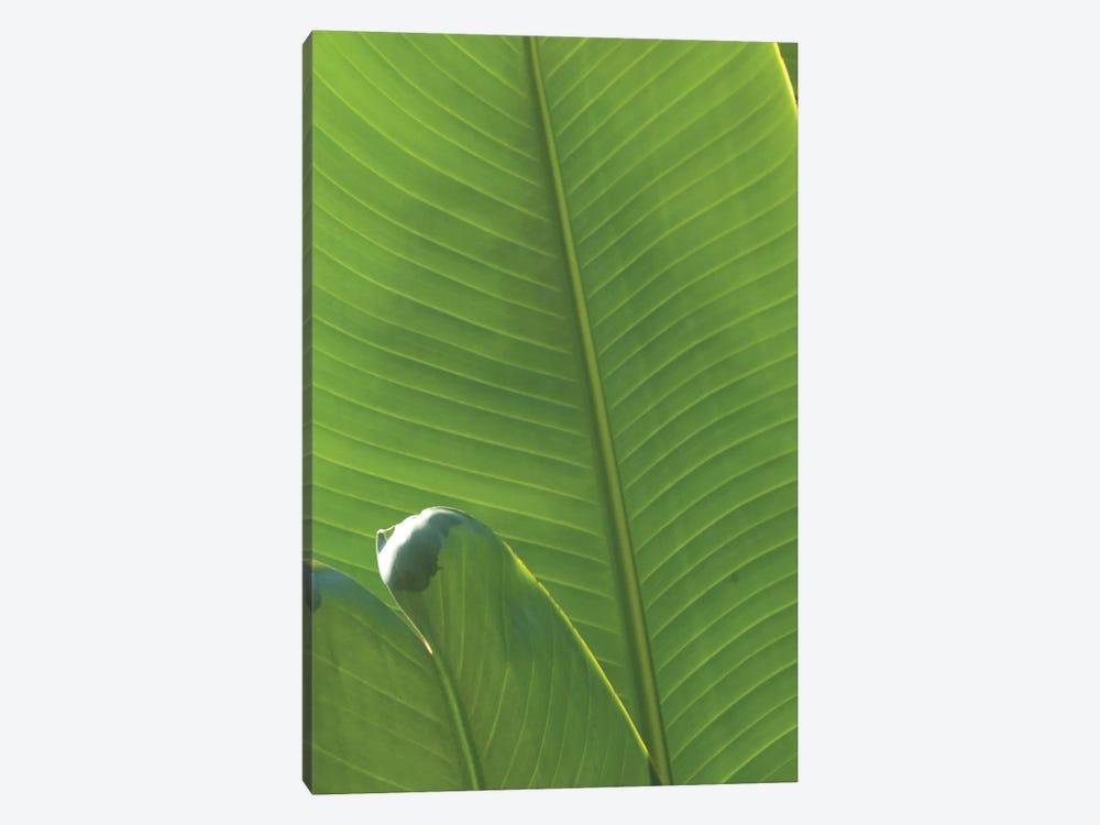 Palm Detail III by Wild Apple Portfolio 1-piece Canvas Art Print