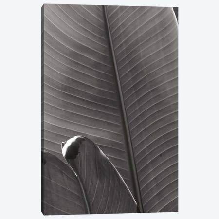 Palm Detail III In Black And White Canvas Print #WAC9753} by Wild Apple Portfolio Canvas Artwork