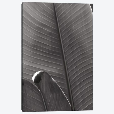 Palm Detail III In Black And White Canvas Print #WAC9753} by Wild Apple Portfolio Canvas Artwork