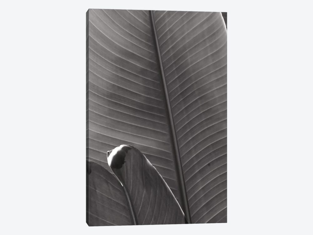 Palm Detail III In Black And White by Wild Apple Portfolio 1-piece Canvas Wall Art