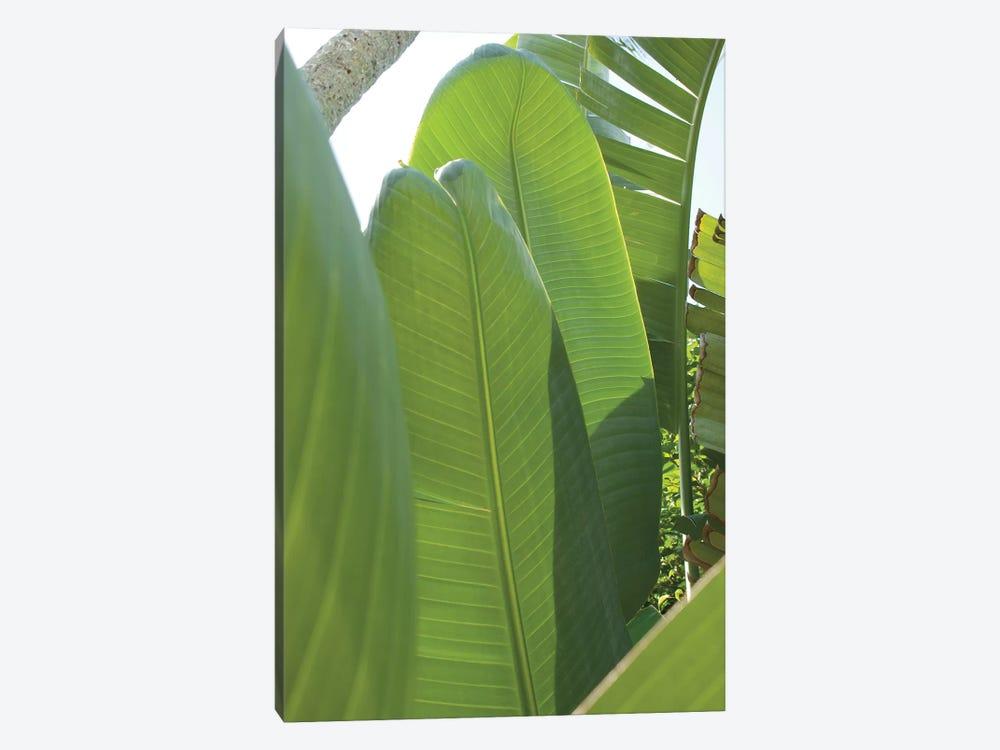 Palm Detail IV by Wild Apple Portfolio 1-piece Art Print