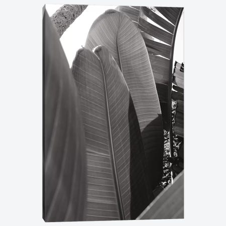 Palm Detail IV In Black And White 3-Piece Canvas #WAC9755} by Wild Apple Portfolio Art Print