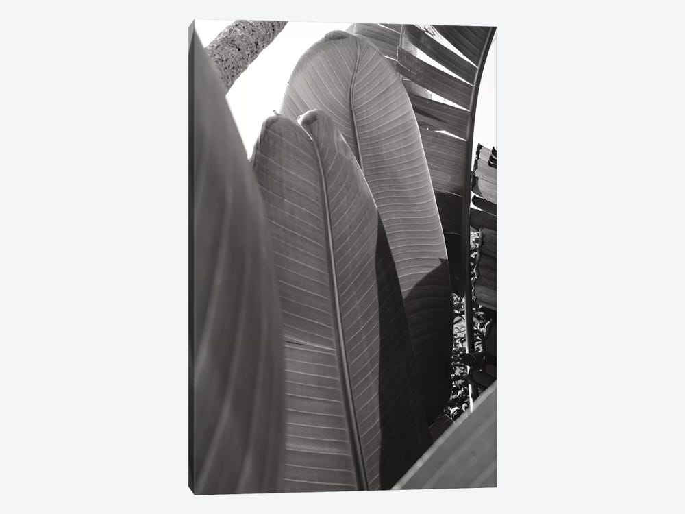 Palm Detail IV In Black And White by Wild Apple Portfolio 1-piece Canvas Art