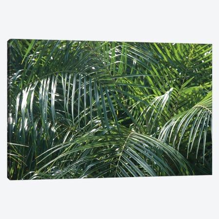 Tropical Fronds Canvas Print #WAC9756} by Wild Apple Portfolio Canvas Art Print