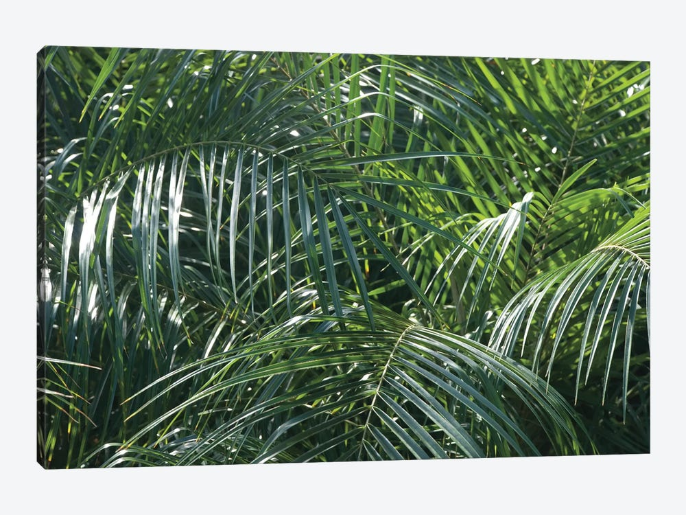 Tropical Fronds by Wild Apple Portfolio 1-piece Canvas Art Print