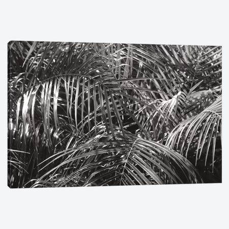 Tropical Fronds In Black And White Canvas Print #WAC9757} by Wild Apple Portfolio Art Print