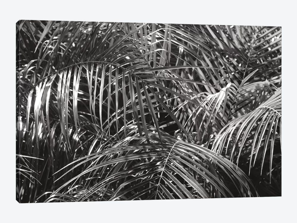 Tropical Fronds In Black And White by Wild Apple Portfolio 1-piece Canvas Wall Art