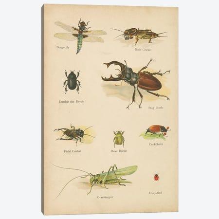 Natural History Book IV Canvas Print #WAC9769} by Wild Apple Portfolio Canvas Art Print