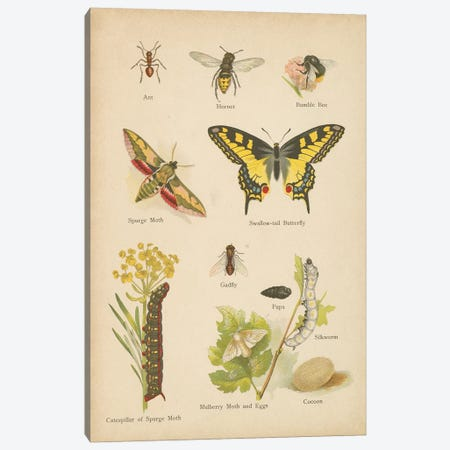 Natural History Book VI Canvas Print #WAC9770} by Wild Apple Portfolio Canvas Wall Art