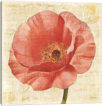 Blushing Poppy on Cream Canvas Print #WAC9