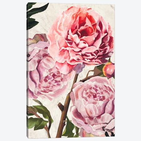 Colossal Floral Canvas Print #WAG110} by Naomi McCavitt Canvas Art Print