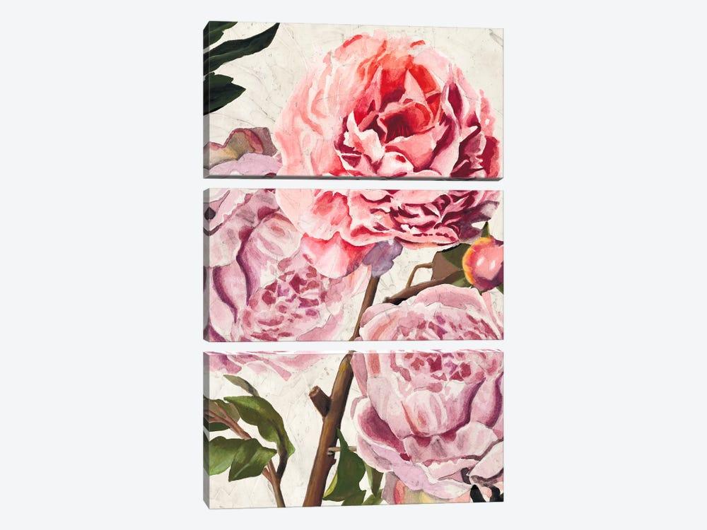 Colossal Floral by Naomi McCavitt 3-piece Canvas Art