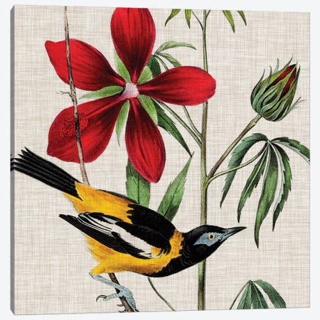 Avian Crop I Canvas Print #WAG138} by John James Audubon Canvas Print