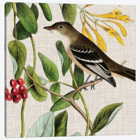 Avian Crop II Canvas Print #WAG139} by John James Audubon Art Print