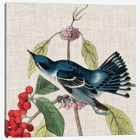 Avian Crop III Canvas Print #WAG140} by John James Audubon Canvas Wall Art